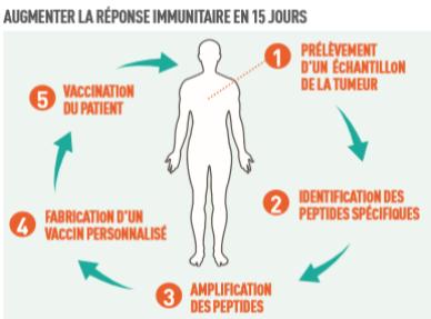 Augmenter la réponse immunitaire