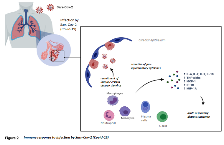 immune response to infection