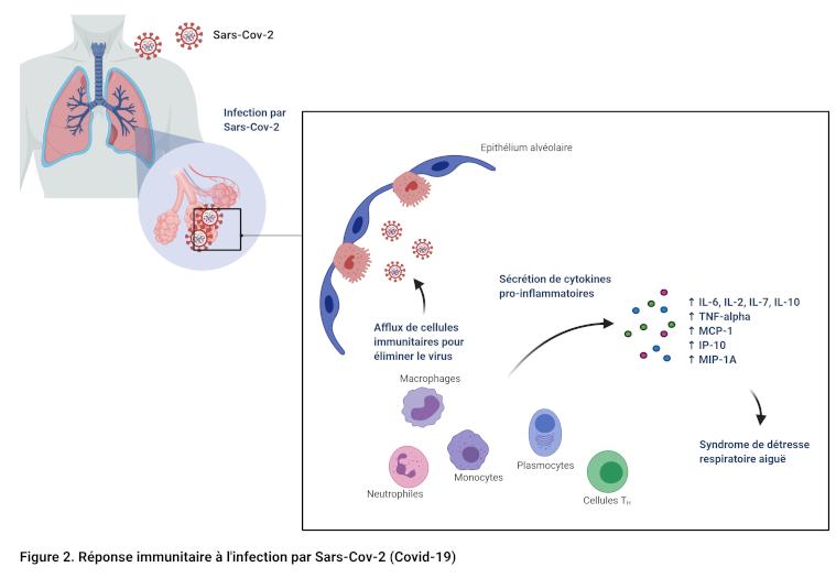 Réponse immunitaire Sars-Cov-2