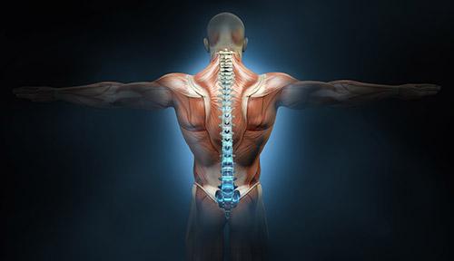 reconstruction par un lambeau scapulo-dorsal