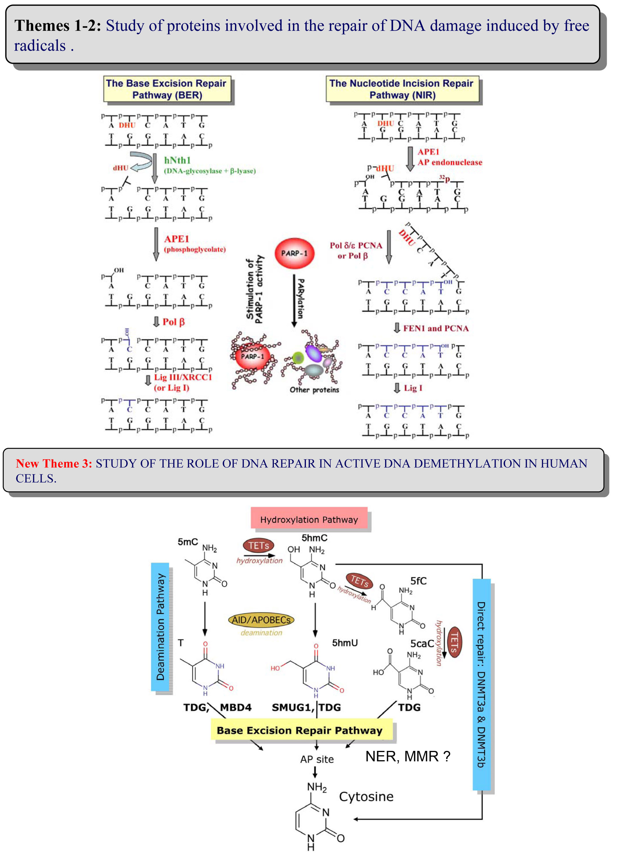 research paper on dna repair